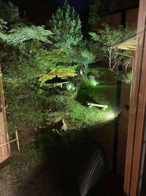 夜の南天苑さんの庭園ライトアップ