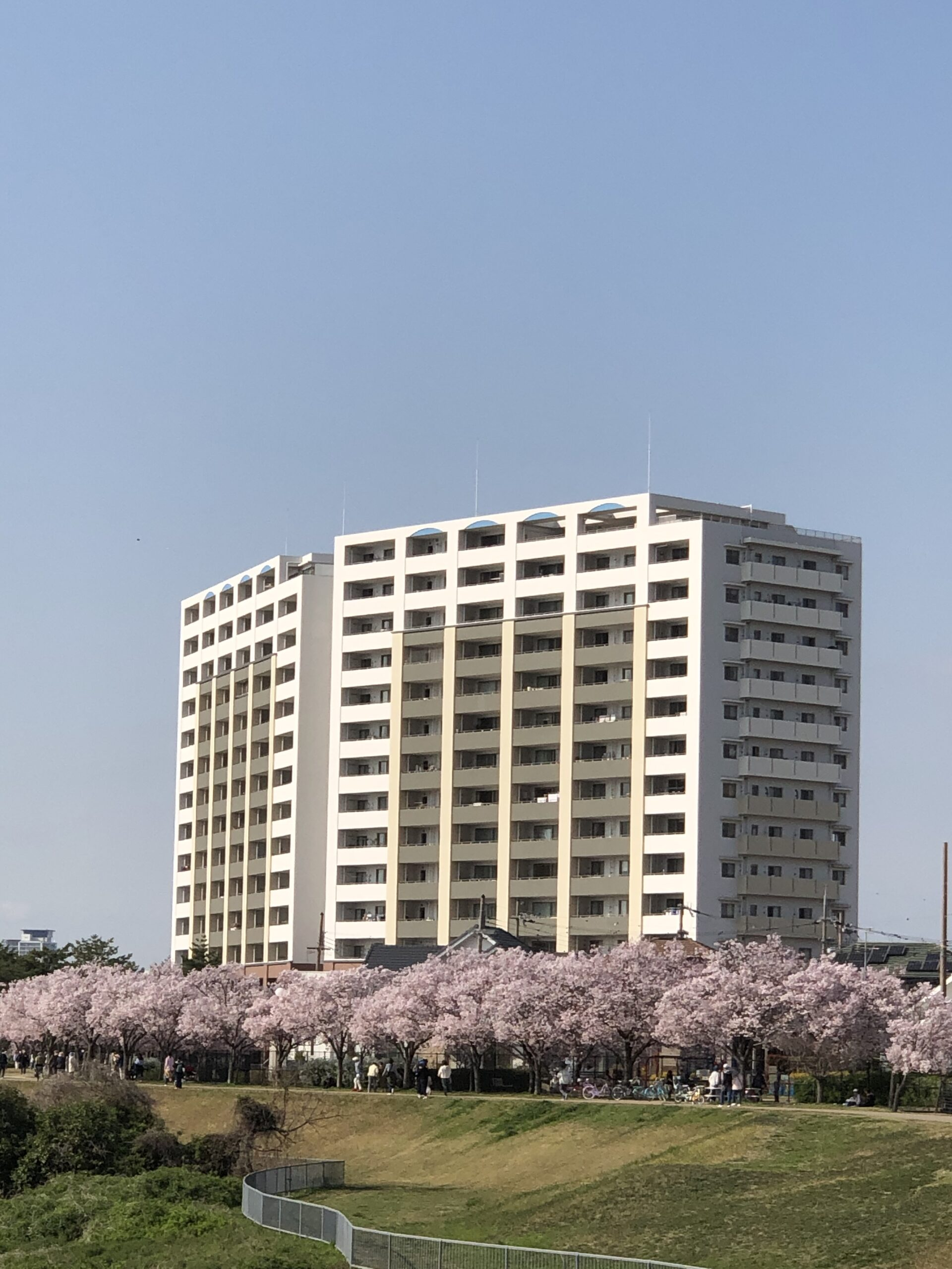2021年春の狭山池の桜開花状況